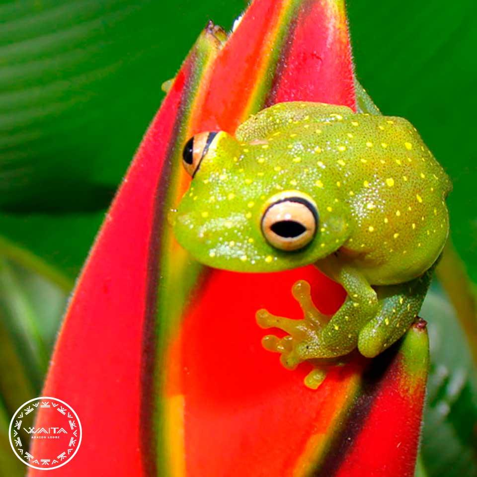 frog-waita