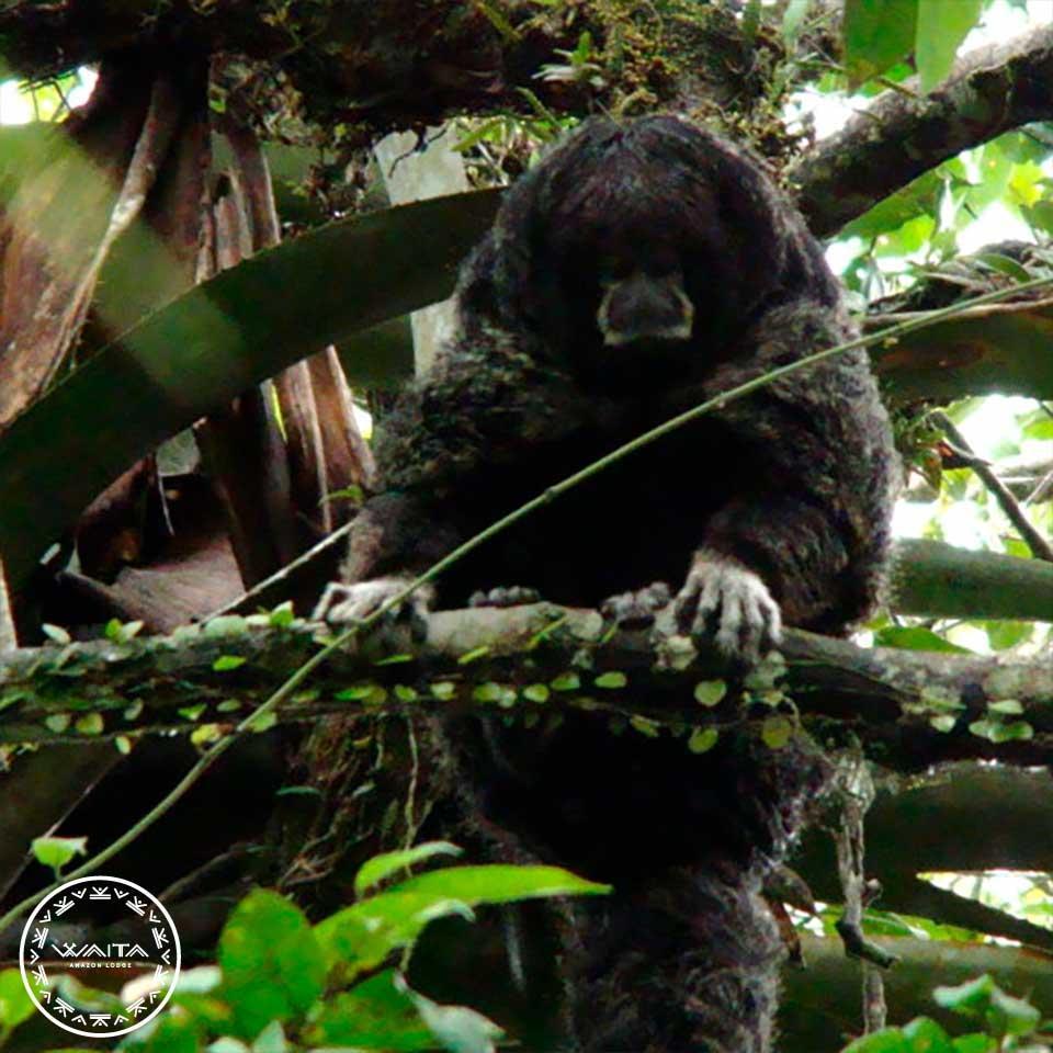 monkey-waita-4
