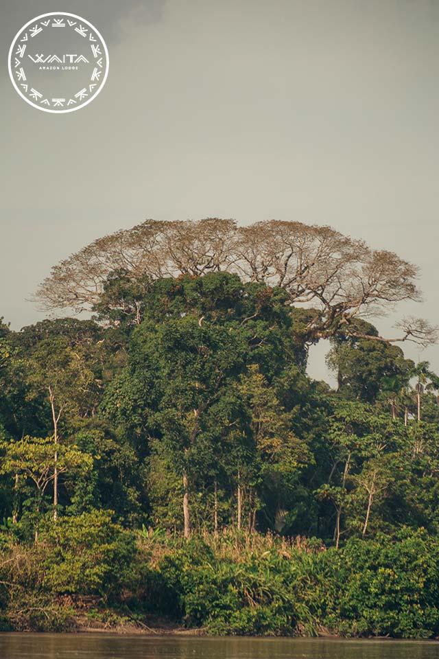 forest-in-cuyabeno-waita-lodge-01